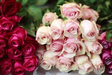 قیمت هر شاخه گل رز کمتر از هزار تومان شد