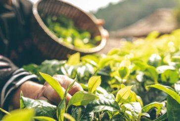 فروش گیاهان دارویی در بورس کالا کلید میخورد