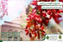 رونمایی از جشنواره یاقوت سرخ همزمان با سفر وزیر جهاد کشاورزی
