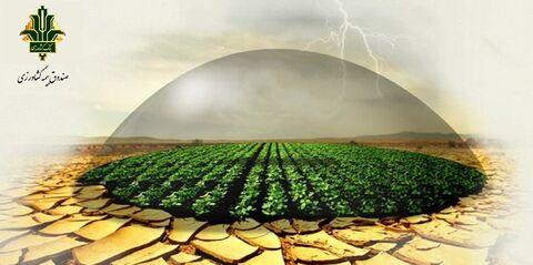 رشد ۱۸۰۰ درصدی تعداد بیمه نامه صادر شده توسط صندوق بیمه کشاورزی