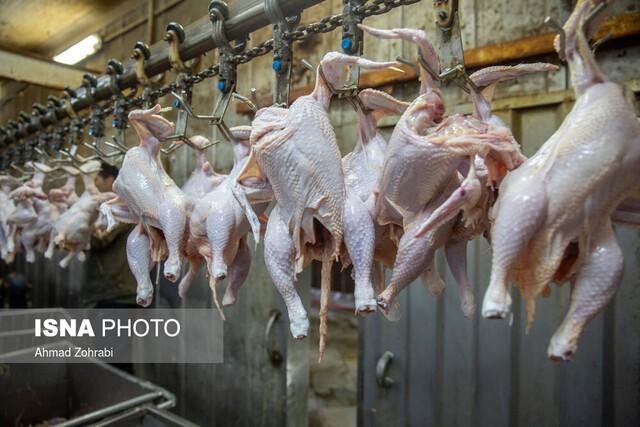 پرونده باز صادرات مرغ در سال ۹۹