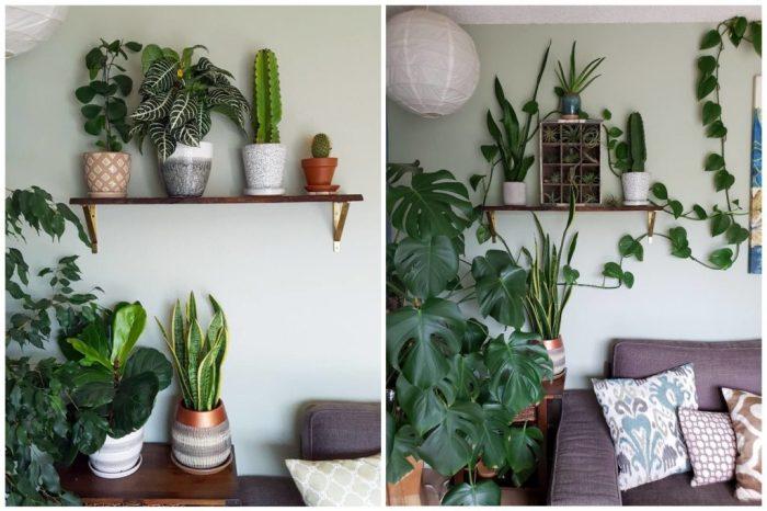 گیاهان آپارتمانی مناسب تاریکی؛ راهنمای خرید و نگهداری